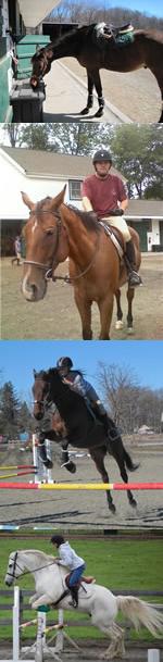 Register for Horseback Riding Lessons in Morristown NJ